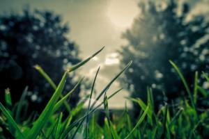 grass[ic